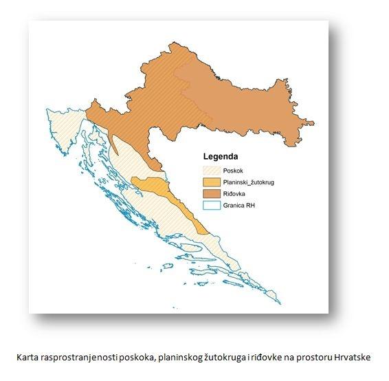 Zmije u Hrvatskoj