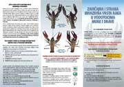 Zavičajna i strana vrsta raka u vodotocima Mure i Drave
