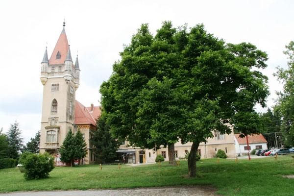 Magnolija-u-Pribislavcu-2