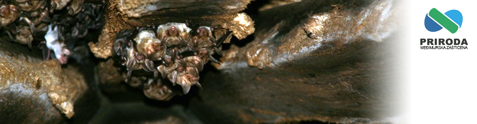 Medjimurska priroda