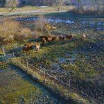 Konji na gmajni